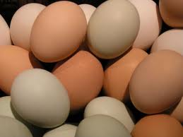 Salmonella Eggs Food Poisoning Food Safety