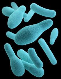 CDC Clost Spore
