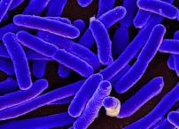 CDC E.coli