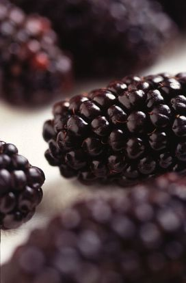 Black_Butte_blackberry